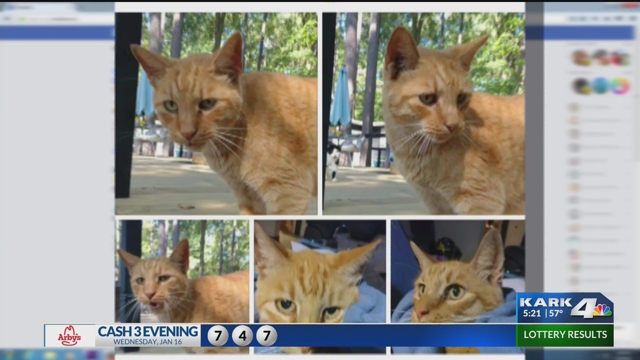 Cat Missing for a Month Reunited with Owner in an Unconventional Way