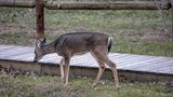 AR CWD Management Zone to expand, public meetings scheduled